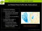 ultraestructura del nucleolo