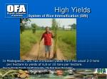 high yields4