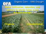 organic corn 1995 drought
