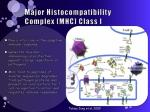 major histocompatibility complex mhc class i