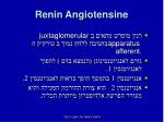 renin angiotensine