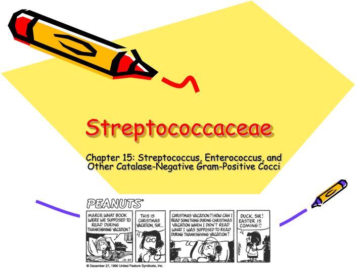 streptococcaceae n.