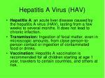hepatitis a virus hav