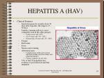 hepatitis a hav19