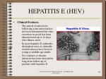 hepatitis e hev70