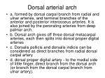 dorsal arterial arch