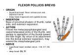 flexor pollicis brevis