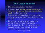 the large intestine