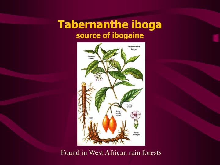 Tabernanthe iboga source of ibogaine