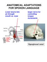 anatomical adaptations for spoken language