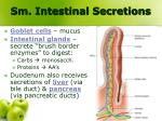 sm intestinal secretions
