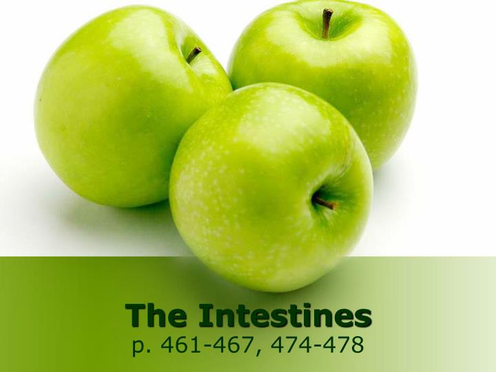 the intestines n.