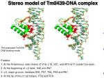 stereo model of tm0439 dna complex