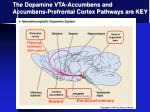 the dopamine vta accumbens and accumbens prefrontal cortex pathways are key