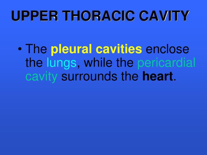 UPPER THORACIC CAVITY