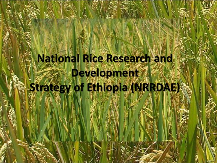 national rice research and development strategy of ethiopia nrrdae n.