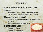 why rice