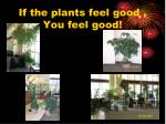 if the plants feel good you feel good