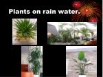 plants on rain water