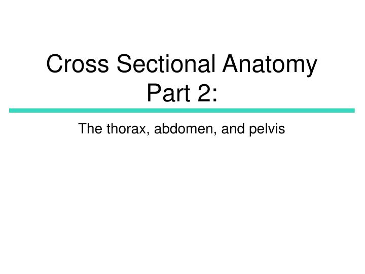 cross sectional anatomy part 2 n.
