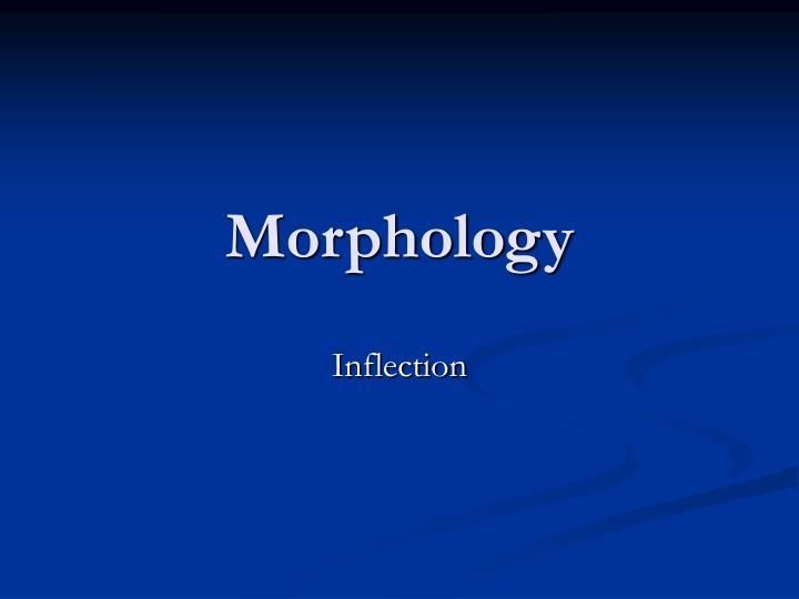 morphology n.