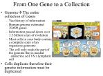 from one gene to a collection