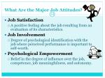 what are the major job attitudes