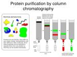 protein purification by column chromatography