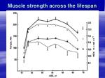 muscle strength across the lifespan