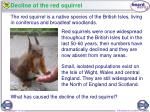 decline of the red squirrel