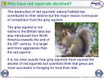 why have red squirrels declined