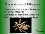 characteristics of arthropods