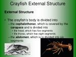 crayfish external structure