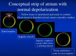 conceptual strip of atrium with normal depolarization