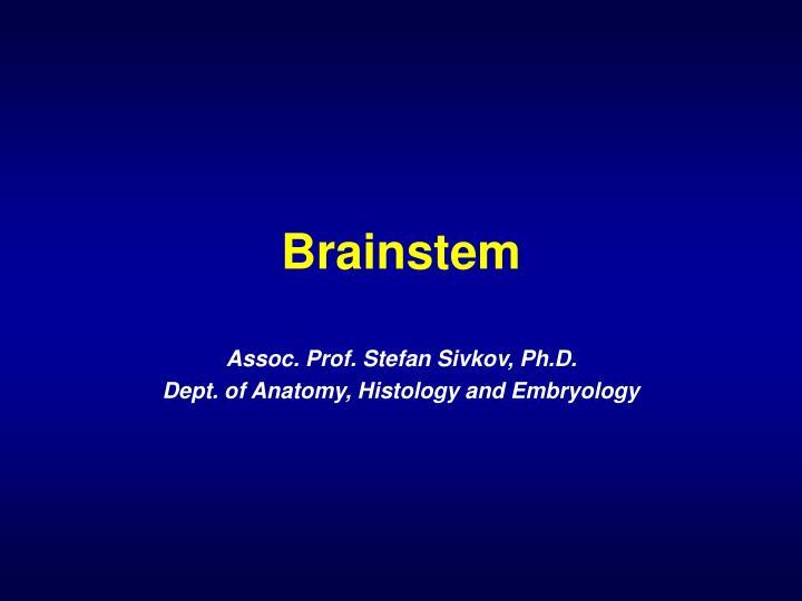 brainstem n.