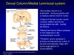 dorsal column medial lemniscal system