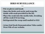 bird surveillance