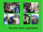 tamariki plant vegetables