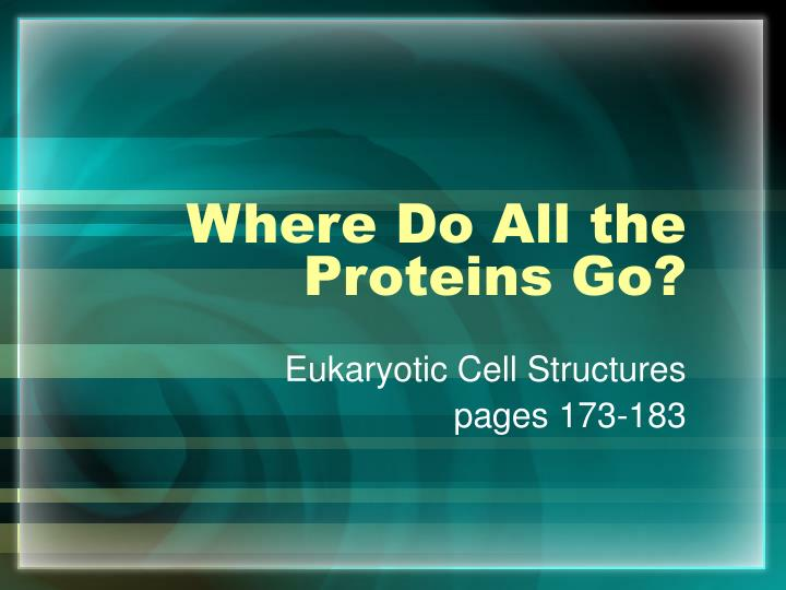where do all the proteins go n.
