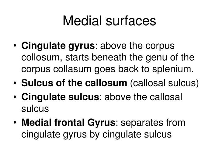 Medial surfaces