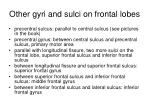 other gyri and sulci on frontal lobes
