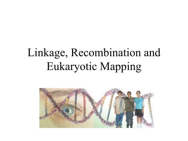 linkage recombination and eukaryotic mapping n.