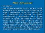 fidos aphis gossypii