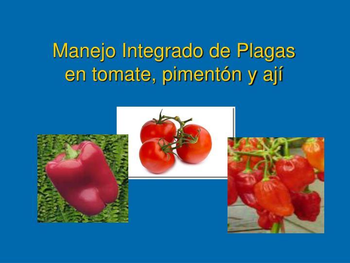 manejo integrado de plagas en tomate piment n y aj n.