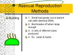 asexual reproduction methods2