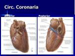 circ coronaria