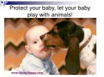 protect your baby let your baby play with animals