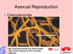 asexual reproduction3