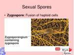 sexual spores