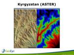 kyrgyzstan aster